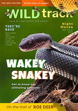 wildlife-magazine-cover-template