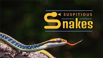 wildlife-youtube-thumbnail-template